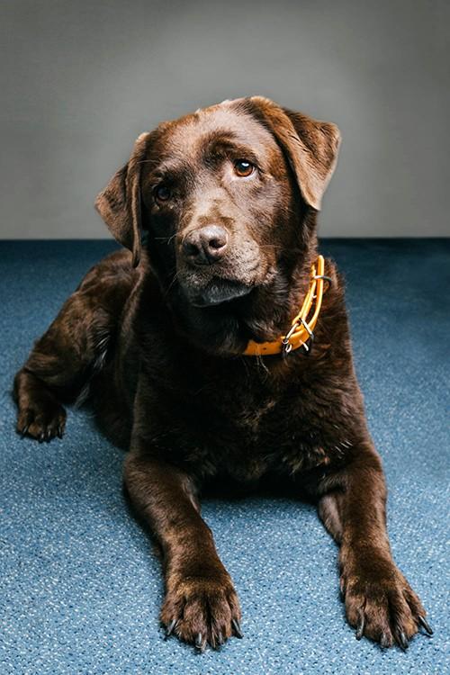bahia, chien guide d'aveugles à la retraite